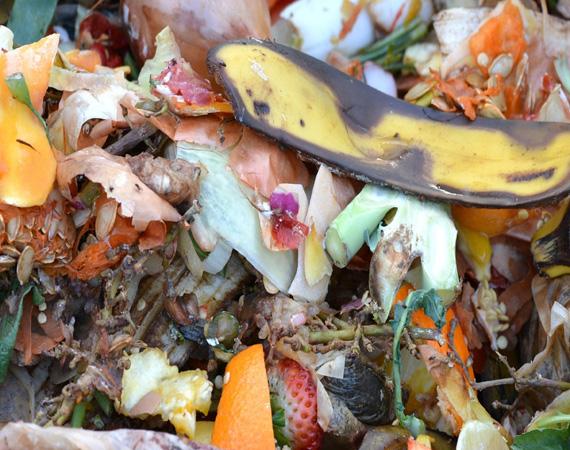 compost-709020_1920